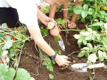 Edible Gardens