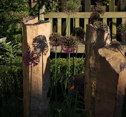 our-garden4-Copy