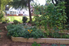 Vegetable-Patch