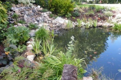Pond-Planting