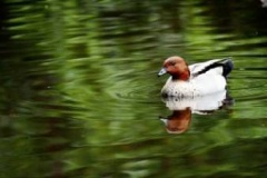 wildlifepond1