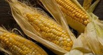 picture of Sweetcorn 'Ashworth'