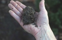 picture of loamy soil