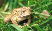 picture of toad