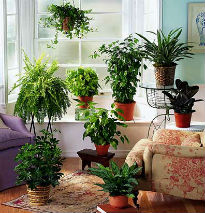 picture of house plants