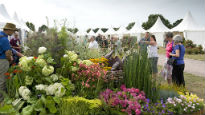 picture of Hyde Hall flower show
