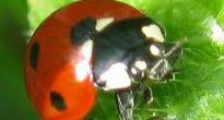 image of ladybird