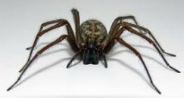 image of spider