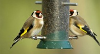image of birds on a bird feeder