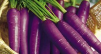 image of purple carrots