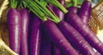 image of purple carrots