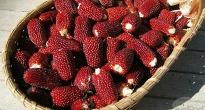 image of Strawberry Popcorn