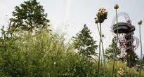 image of European garden
