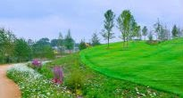 image of Swales and Rain Garden