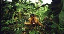 image of picking medicinal herbs