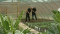 image of prisoners gardening in greenhouse