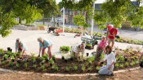 picture of communal gardening