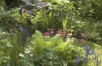 picture of bog garden