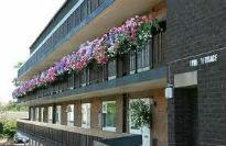 picture of verandah in bloom