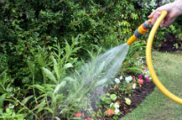picture of watering a garden