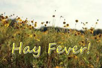 image of hay fever poster