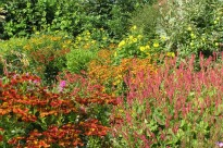 image of red flowering plants