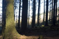 picture of dark wood