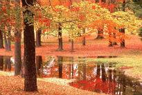 image of autumn woodland