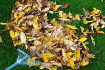 image of leaves on the lawn