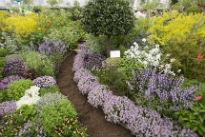image of Jekka Chelsea garden