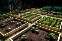 image of raised sleeper vegetable plots