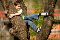 picture of boy climbing a tree