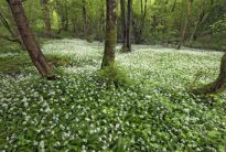 image of forest floor at Borrowdale