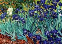 image of Van Gogh irises