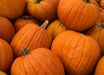 image of Giant Pumpkins