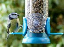 image of blue tit feeding