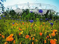 picture of Olympic Park meadow