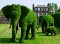 picture of topiary elephants