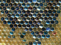image of coloured honeycomb