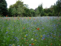 image of meadow at Shadwell Park