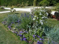 image of blue, mauve and white flowering plants