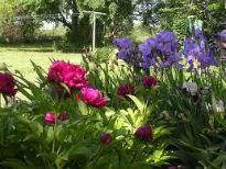 image of irises and peonies