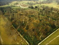 image of devastated forest