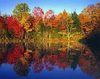 image of trees in autumn