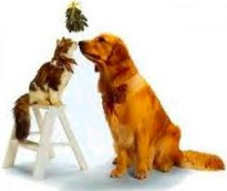 image of cat and dog underneath mistletoe