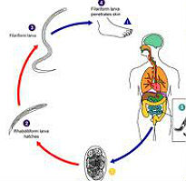picture of germ cycle