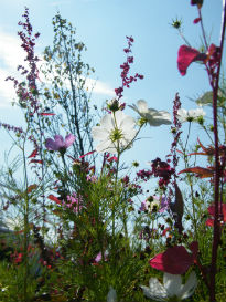 image of plants at Olympic Park