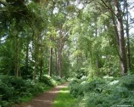 image of beautiful woodland scene