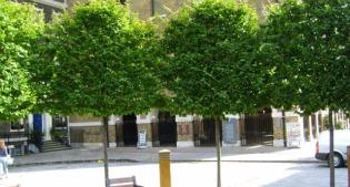 image of trees in urban space