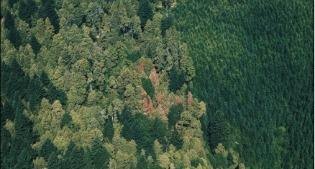 image of dying woodland